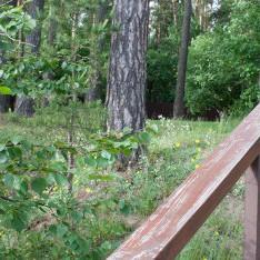 Лес рядом с КП Елочка